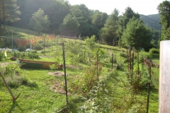 ITAL FOOD FOREST 2012
