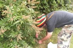 Harvest Chaste