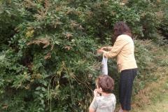19 Harvesting Chaste